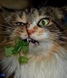植物搞笑趣图 不信你不笑